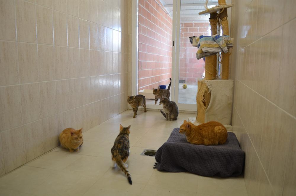 Hay zonas diferenciadas para gatos y gatas. La esterilización es un clave para controlar colonias y el celo. Foto Sonia Baños