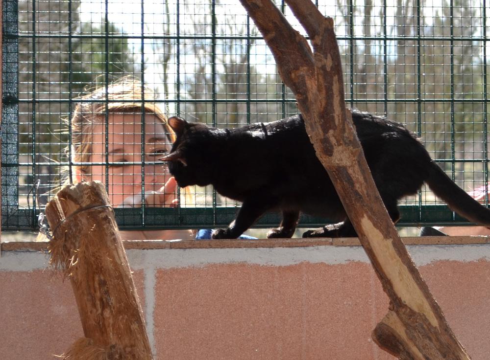 Los animales tienen luz solar, una de las mejoras que han realizado. Foto: Sonia Baños