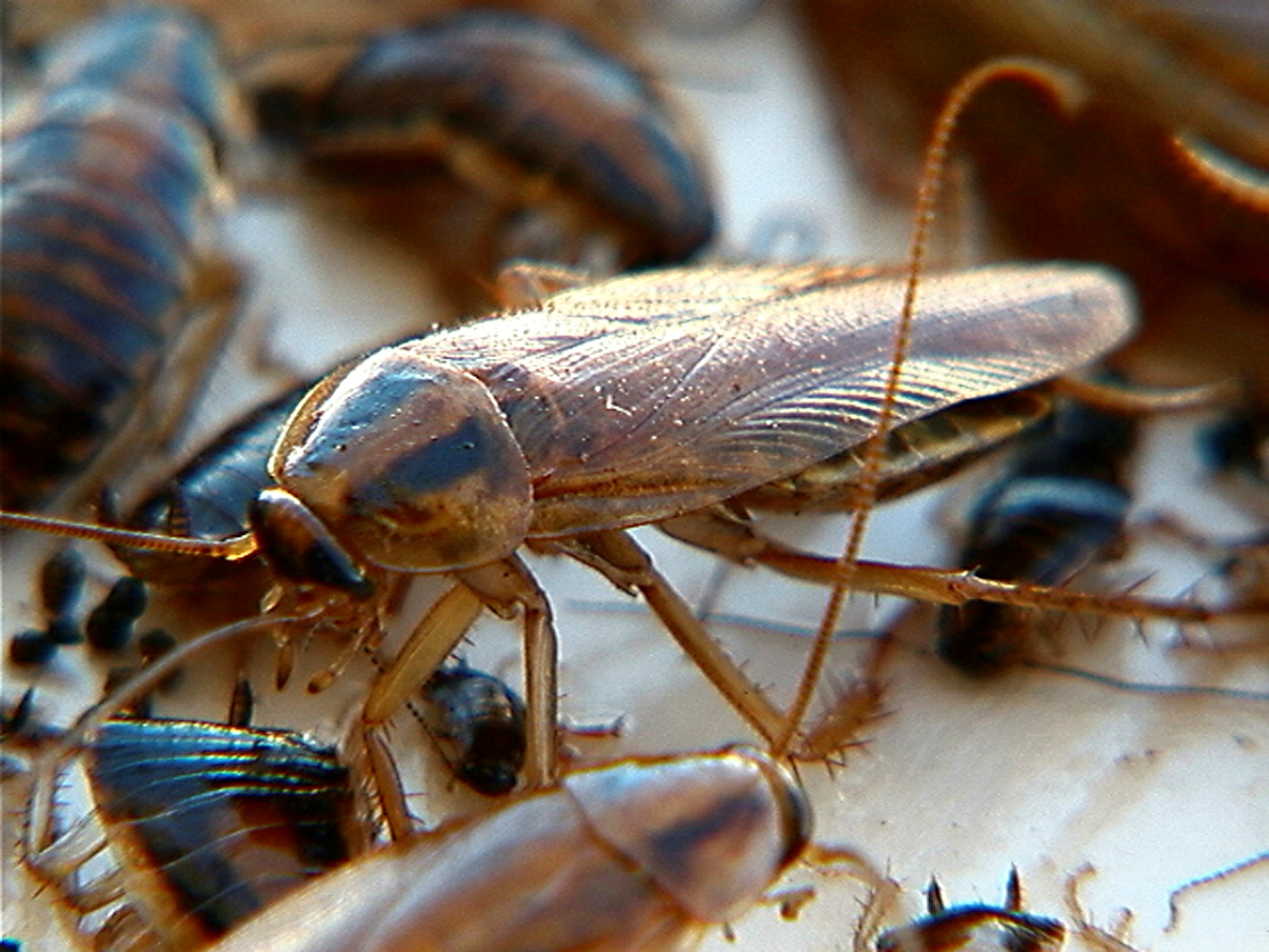 Getafe control de mosquitos cucarachas y otros insectos - Que hacer contra las cucarachas ...