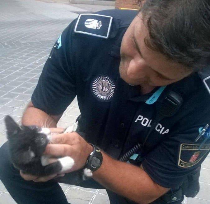 Uno de los gatos a los que ayudó el equipo policial.