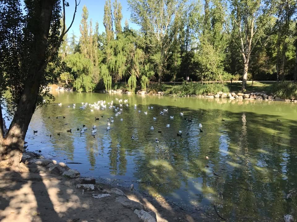 M stoles contin an los trabajos de mejora en el parque for Piscina el soto mostoles
